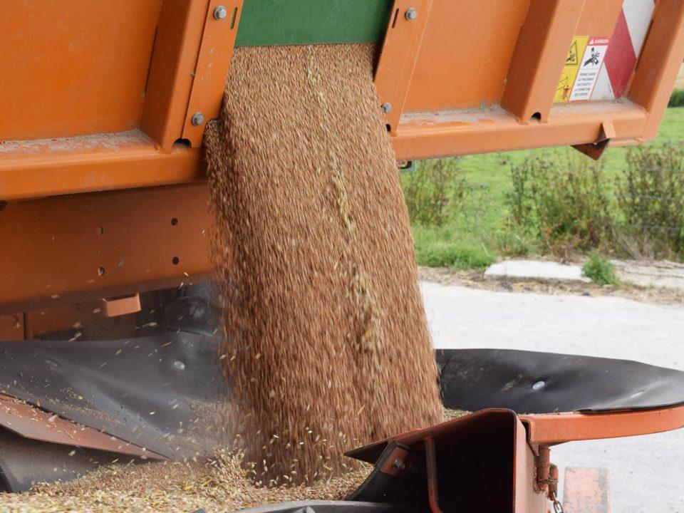 Déchargement d'une benne agricole avec une bande transporteuse