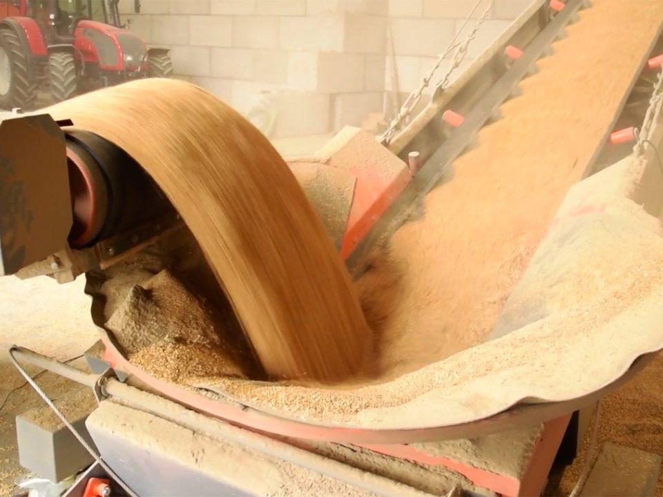 convoyage blé-tapis-élévateur-agricole