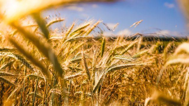 Agriculture et valorisation des produits organiques
